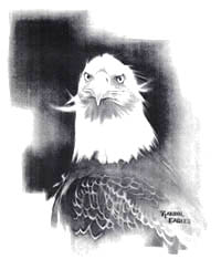 American Bald Eagle, charcoal sketch by Randol Eagles